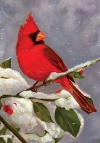 Red Beauty Flag | Winter Flags | Bird Flags | Cardinal Flags | Cool Flags