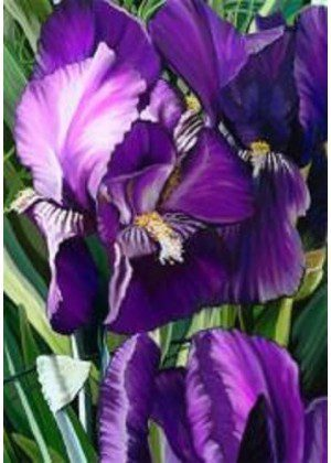 Purple Irises Flag | House Flag | Garden Flag | Flag | Garden House Flags