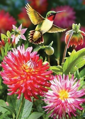 Hummingbird Dahlias Flag | Flags | Garden Flags | Garden House Flags