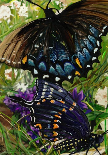 Black Swallowtails Flag | House Flags | Garden Flag | Garden House Flags